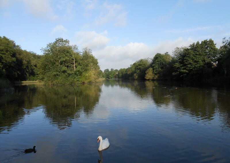 Maiden Erlegh lake in summer